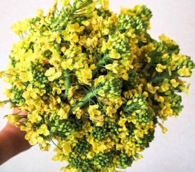 黄色 食べ れる ブロッコリー